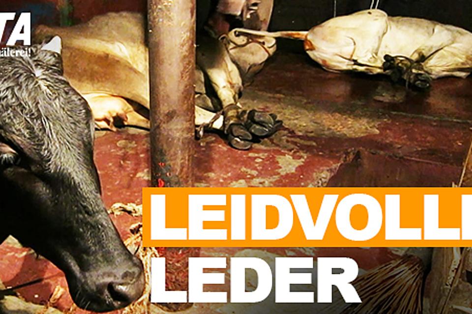 Red Bull Kühlschrank Leder : Freier autoren verlag peta beweist: leder ist eine globale katastrophe